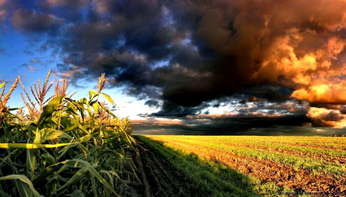 kukurica-a-zapad-slnka